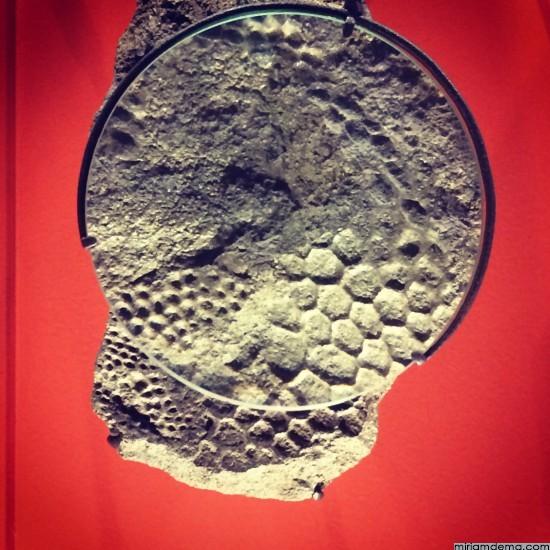 miriamdema-scale-fossil