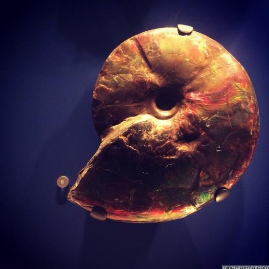 miriamdema-fossil-shell
