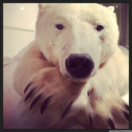 miriamdema-polar-bear
